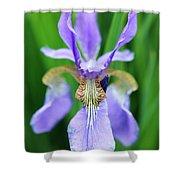 Siberian Iris Flower Shower Curtain