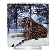 Siberian Tiger Lying On Mound Of Snow Shower Curtain