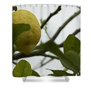 Sicilian's Lemonade Shower Curtain