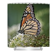 Side Profile Of A Monarch Shower Curtain