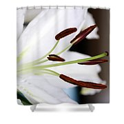 Side View Of A Lily 2 Shower Curtain