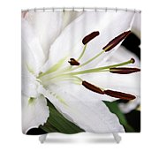 Side View Of A Lily 3 Shower Curtain