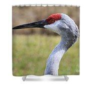 Sideways Sandhill Crane Shower Curtain