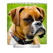 Sidney The Boxer Shower Curtain