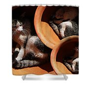Siesta  4 Shower Curtain