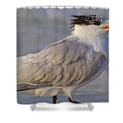 Siesta Key Royal Tern Shower Curtain