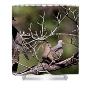 Siesta Time - Mourning Dove Shower Curtain