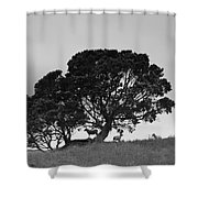 Silhouette Of A Tree With Sheep Shower Curtain