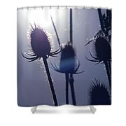 Silhouette Of Weeds Shower Curtain
