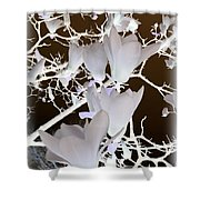 Silhouetted Blossoms Shower Curtain