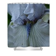 Silky Iris Shower Curtain