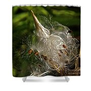 Silky Milkweed Shower Curtain