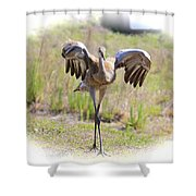 Silly Sandhill Crane Chick Shower Curtain