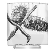 Silver Banksia Seeds Shower Curtain