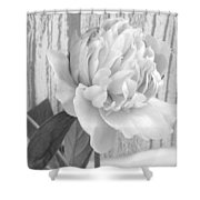 Silver Beauty Shower Curtain