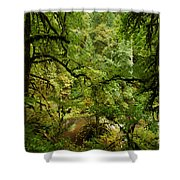 Silver Falls Rainforest Shower Curtain
