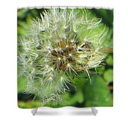 Silver Feathers Shower Curtain