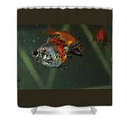 Silver Goldfish Shower Curtain