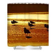 Silver Gulls On Golden Beach Shower Curtain