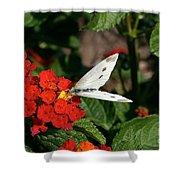 Silver Moth Shower Curtain