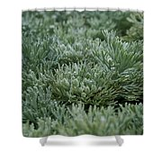 Silver Mound Dew Drenched Shower Curtain