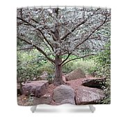 Silver On Trunk Shower Curtain