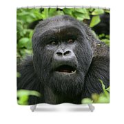 Silverback Portrait Shower Curtain