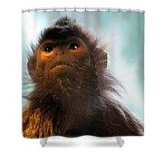 Silvered Langur Shower Curtain