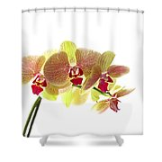 Simplified Orchids I Shower Curtain