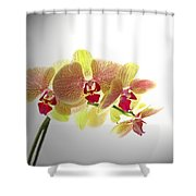 Simplified Orchids II Shower Curtain