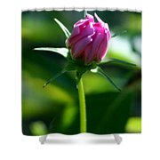 Simply Pink Shower Curtain