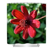 Simply Ruby  Shower Curtain