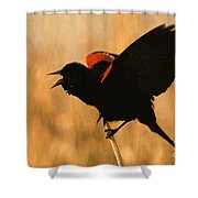 Singing At Sunset Shower Curtain