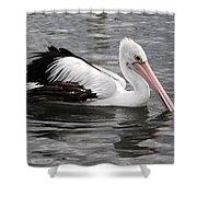 Single Australian Pelican Shower Curtain