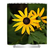 Single Daisy Shower Curtain