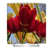 Single Late Red Georgette Shower Curtain