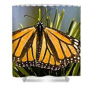 Single Monarch Butterfly Shower Curtain
