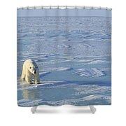 Single Polar Bear Shower Curtain