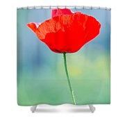 Single Poppy Shower Curtain