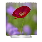 Single Red Poppy  Shower Curtain