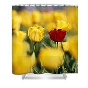 Single Red Tulip Among Yellow Tulips Shower Curtain