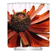 Single Susan Shower Curtain