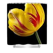 Single Yellow And Red Tulip Shower Curtain