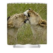 Sisterly Love Shower Curtain