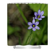 Sisters Of The Purple Plants Shower Curtain