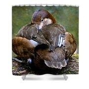 Sitting Duck Shower Curtain
