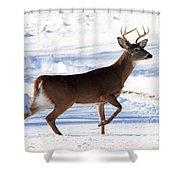 Six Point Buck Shower Curtain