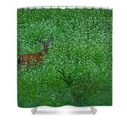 Six Point Deer In Wildflowers Shower Curtain