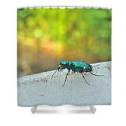 Six-spotted Tiger Beetle - Cicindela Sexguttata Shower Curtain