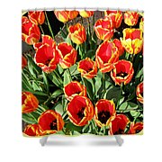 Skagit Valley Tulips 10 Shower Curtain